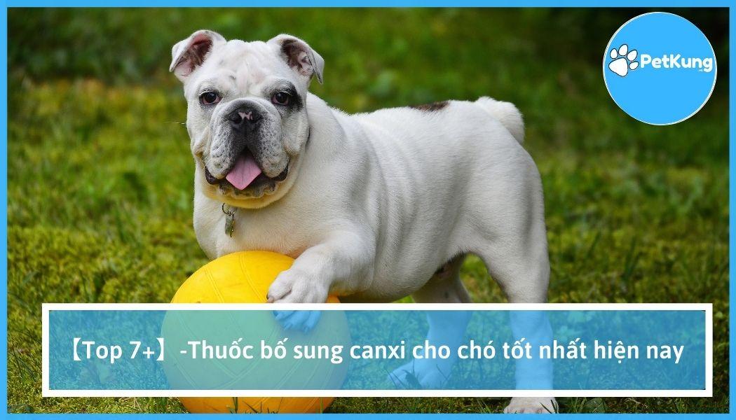 【top 7+】-thuốc bố sung canxi cho chó tốt nhất hiện nay