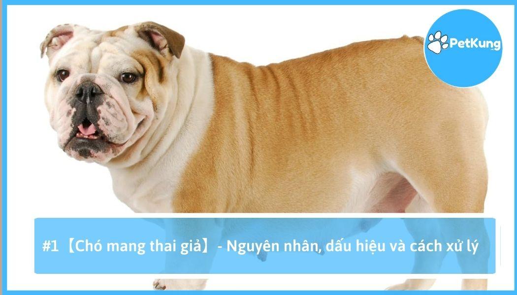 Chó mang thai giả - nguyên nhân, dấu hiệu và cách xử lý
