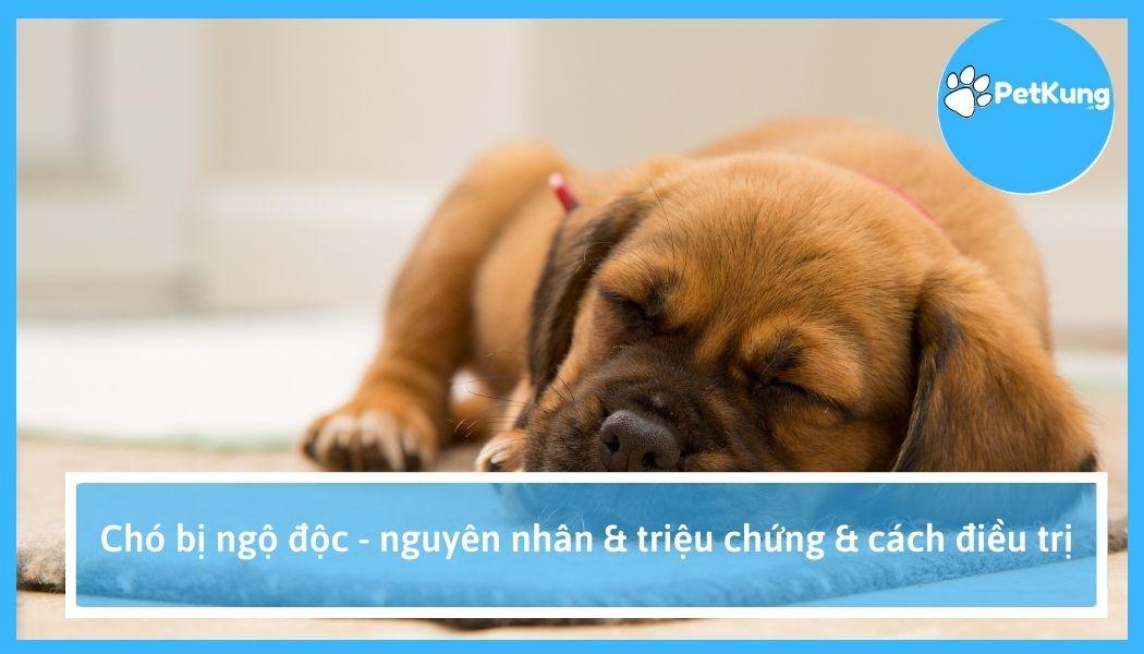 Chó bị ngộ độc - nguyên nhân & triệu chứng & cách điều trị