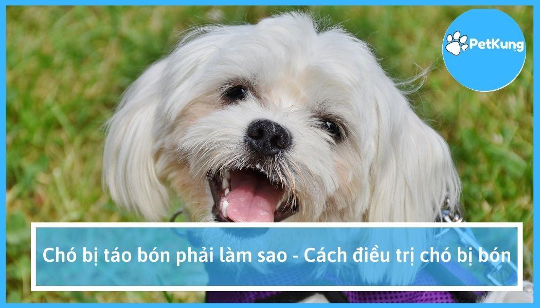 Chó bị táo bón phải làm sao - cách điều trị chó bị bón
