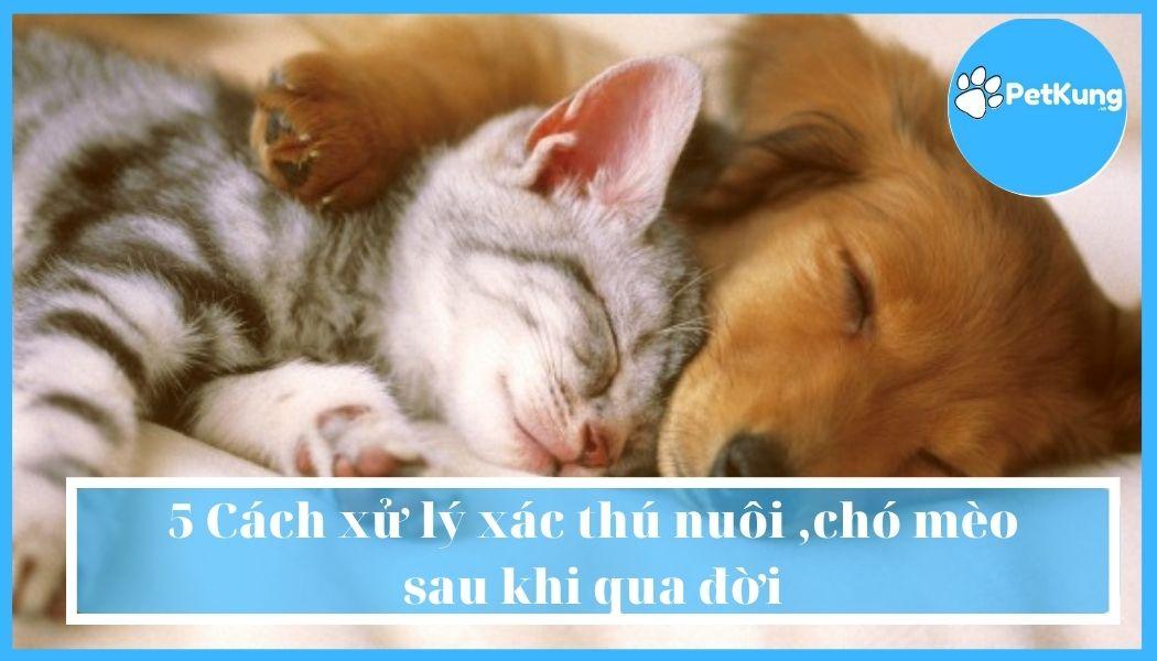 5 cách xử lý xác thú nuôi ,chó mèo sau khi qua đời