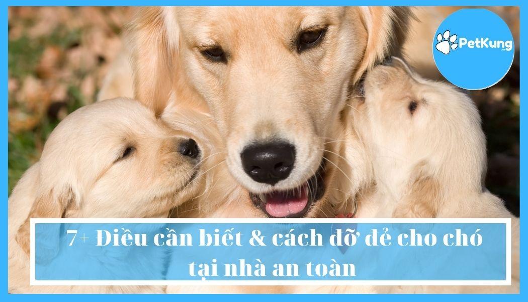 7+ điều cần biết & cách đỡ đẻ cho chó tại nhà an toàn
