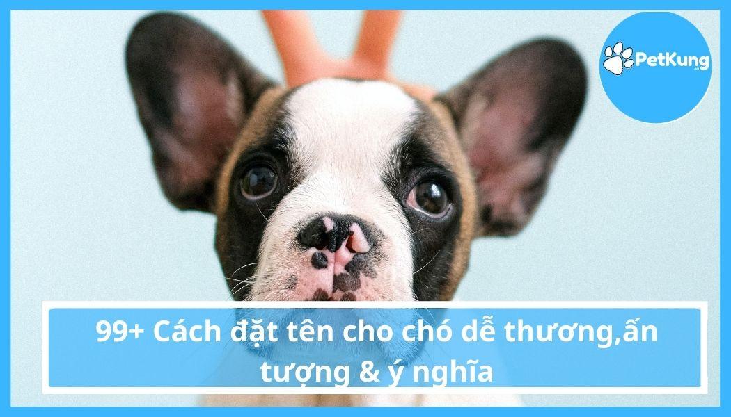 99+ Cách đặt tên cho chó dễ thương & ấn tượng & ý nghĩa