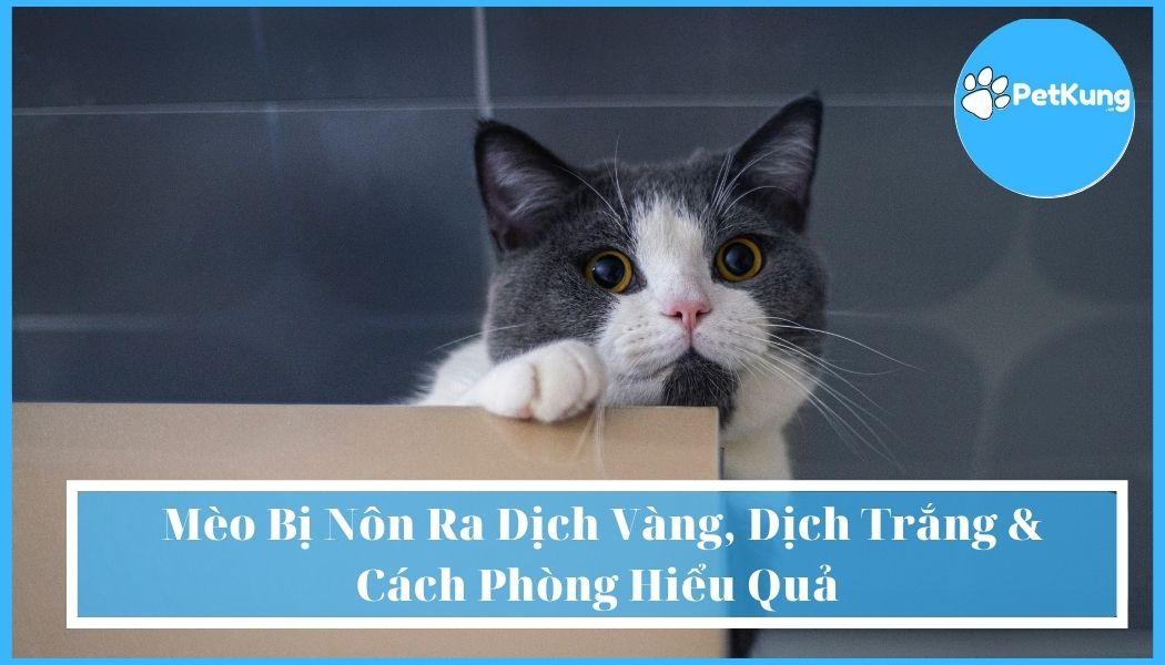 Mèo Bị Nôn Ra Dịch Vàng, Dịch Trắng & Cách Phòng Hiểu Quả